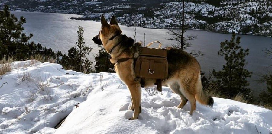 bug out bag for dogs preppingplanet.com