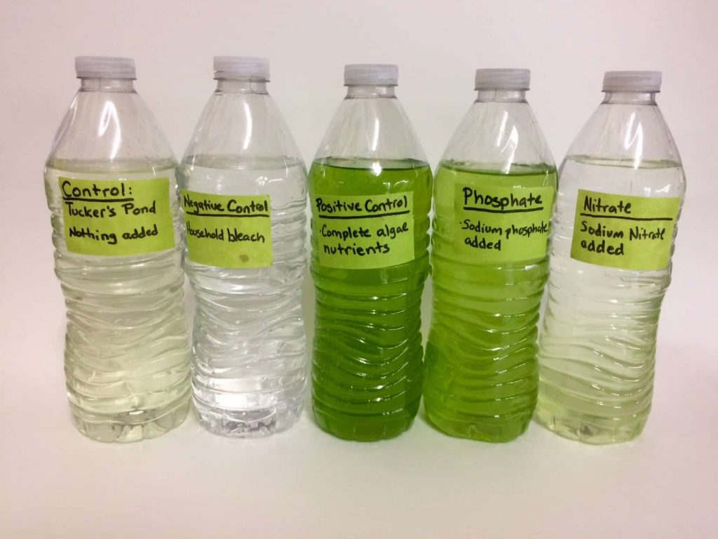 Why are algae growing in bottled drinking water preppingplanet.com