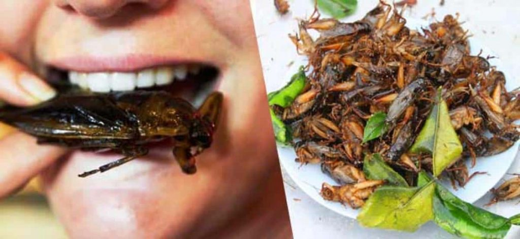 Eating cockroaches benefits preppingplanet.com