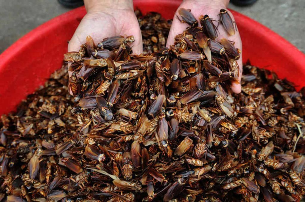 Eating cockroaches in China preppingplanet.com