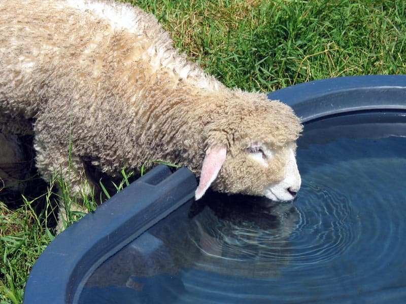 advantages of rainwater harvesting water for livestock preppingplanet.com
