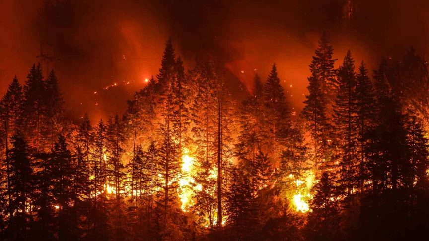 interesting facts about wildfires